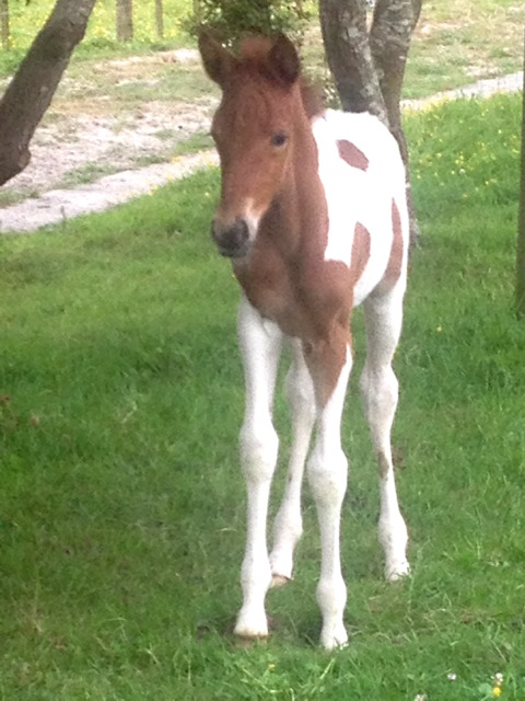 Filly Foal By Galaxy Pourewa